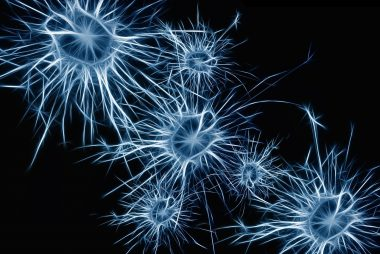 neurons-1773922_1280